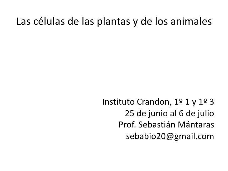 Las células de las plantas y de los animales                   Instituto Crandon, 1º 1 y 1º 3                          25 ...