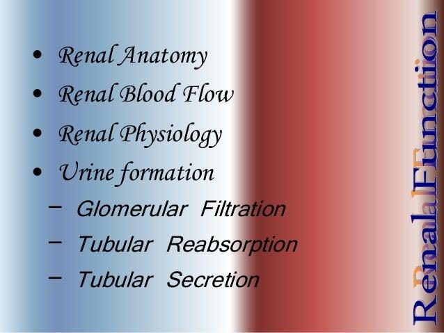 • Renal Anatomy • Renal Blood Flow • Renal Physiology • Urine formation – Glomerular Filtration – Tubular Reabsorption – T...