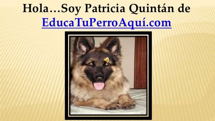 Hola…Soy Patricia Quintán de   EducaTuPerroAquí.com