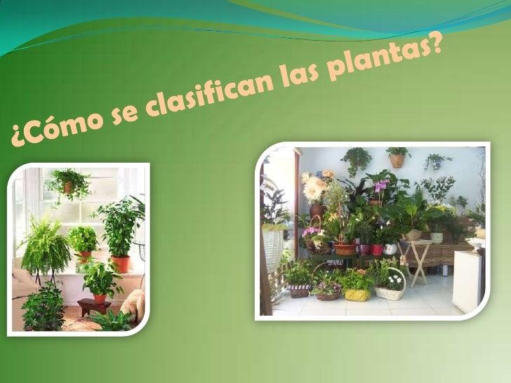 ¿Cómo se clasifican las plantas?<br />