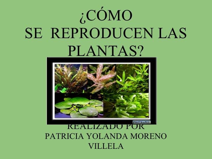 ¿CÓMO SE REPRODUCEN LAS      PLANTAS?          REALIZADO POR   PATRICIA YOLANDA MORENO            VILLELA