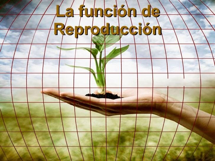 Funcion reproduccion