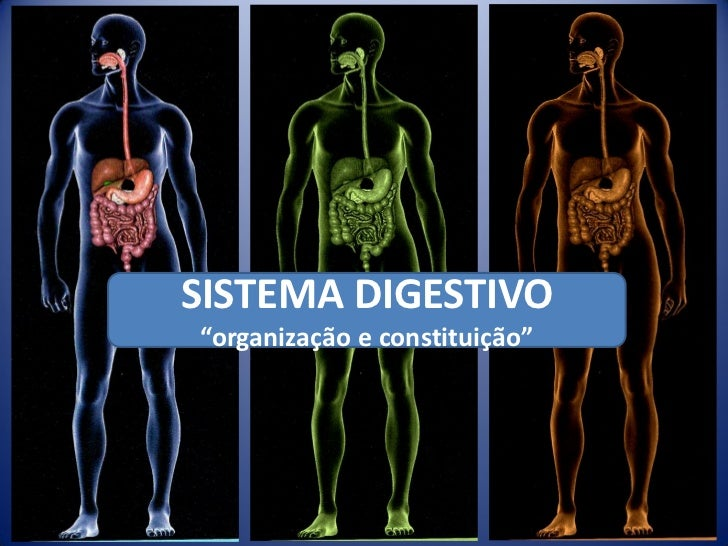 """SISTEMA DIGESTIVO""""organização e constituição"""""""