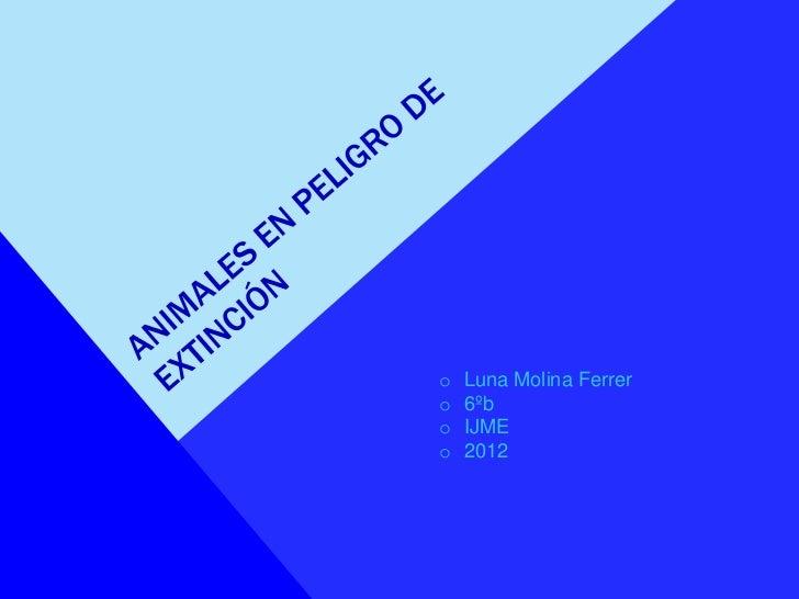 o   Luna Molina Ferrero   6ºbo   IJMEo   2012