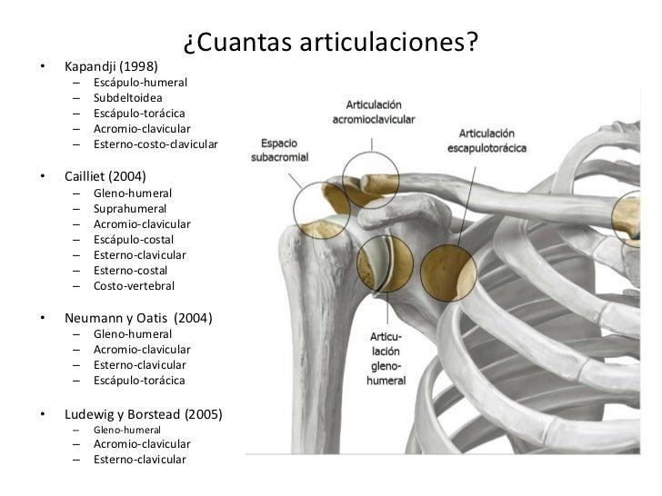 Lesiones más frecuentes en el hombro del deportista. - El Blog de la ...
