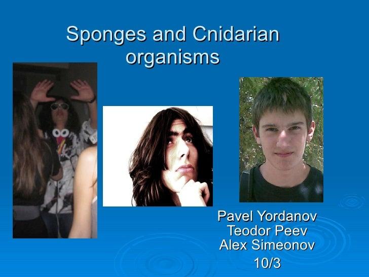 Sponges and Cnidarian organisms Pavel Yordanov Teodor Peev Alex Simeonov 10/3