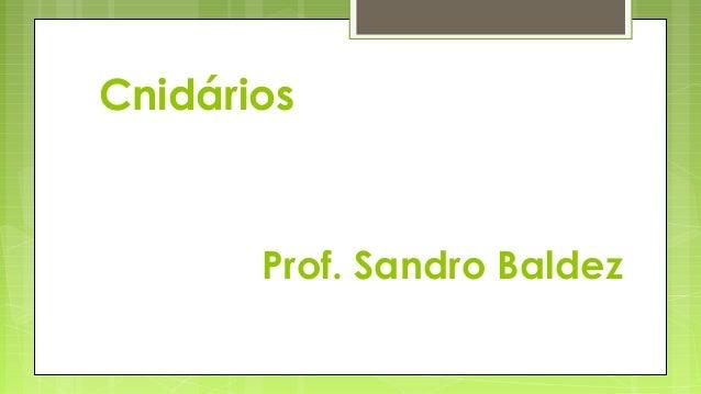 Prof. Sandro BaldezCnidários
