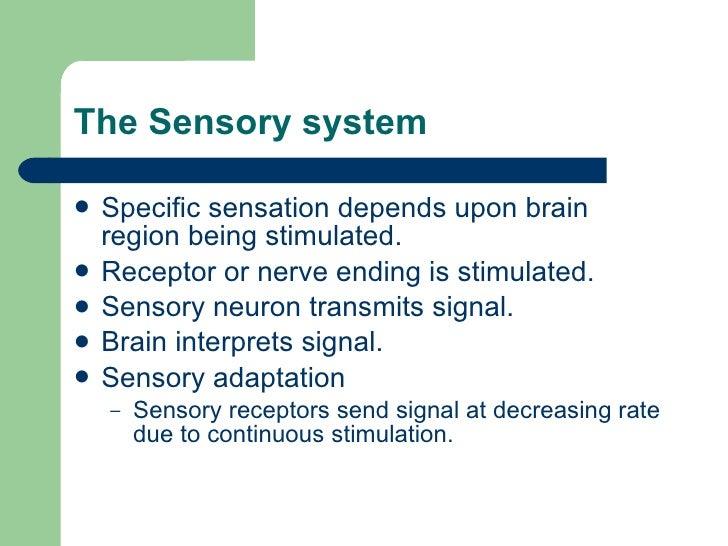 The Sensory system  <ul><li>Specific sensation depends upon brain region being stimulated. </li></ul><ul><li>Receptor or n...