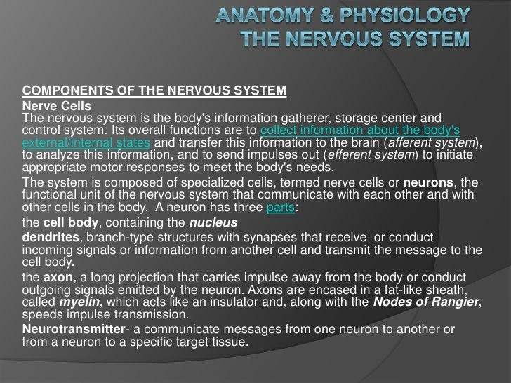 Anatomy & Physiology The Nervous System<br />COMPONENTS OF THE NERVOUS SYSTEM<br />Nerve CellsThe nervous system is the bo...