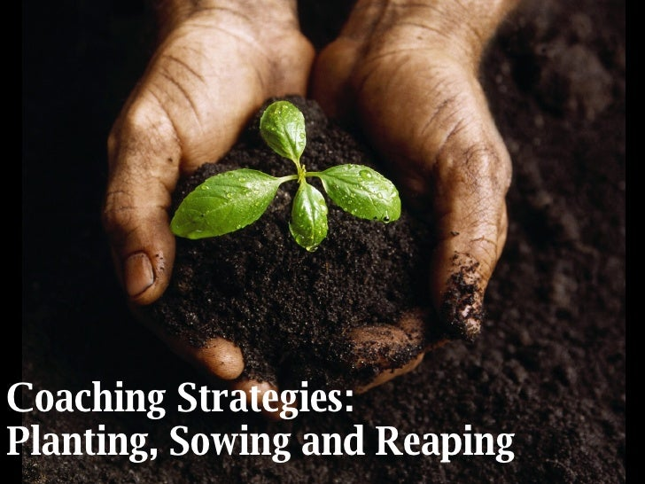 Coaching Strategies: Planting, Sowing and Reaping