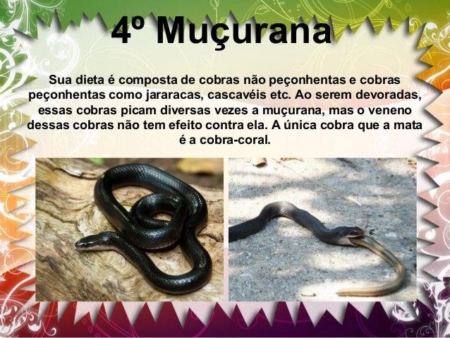 5º Sucuri A sucuri é a maior serpente do mundo e pode viver até 30 anos. As fêmeas são maiores que os machos, atingindo a ...