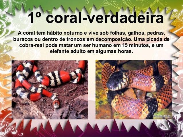 2º Manba-Preta E considerada uma das cobras mais perigosas do mundo, podendo ser encontrada no Brasil no instituto butanta...
