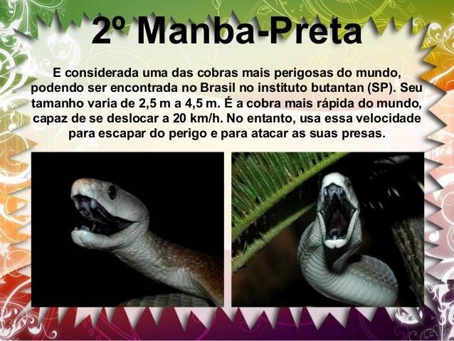 3º Surucucu A surucucu e mais comum na Amazônia e na Mata Atlântica. A sintomatologia na vítima devido a ação proteolítica...