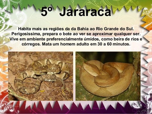 Não venenosas São chamadas de cobras não-peçonhentas as cobras que não possuem os chamados dentes inoculadores de veneno, ...