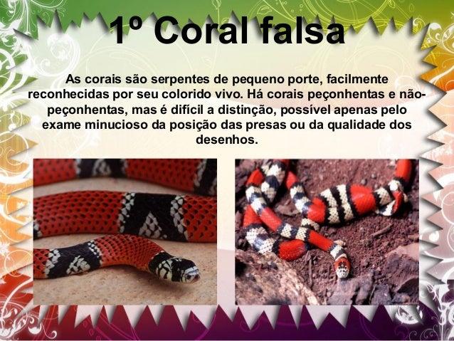 2ºCobra-cipó Cobra-cipó é o nome popular das serpentes do gênero Chironius. Também é conhecida pelo nome boiobi, que é de ...