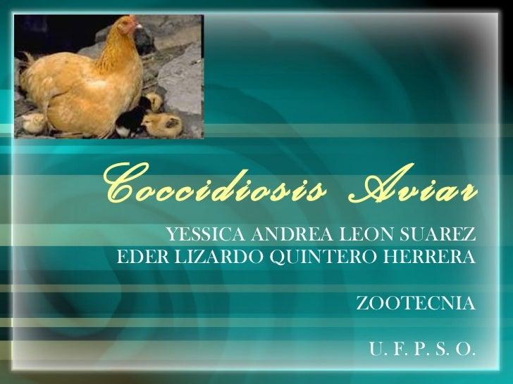 Coccidiosis Aviar YESSICA ANDREA LEON SUAREZ EDER LIZARDO QUINTERO HERRERA ZOOTECNIA U. F. P. S. O.