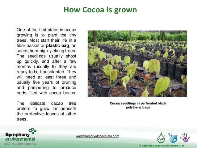 production of chocolate 2 essay About fair trade chocolate history essay fair trade is a social movement which tries to help people who make things in developing countries quinoa, fresh fruit, chocolate.