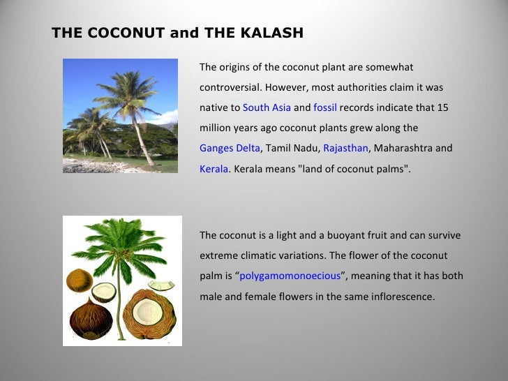 The coconut is a light and a buoyant fruit and can survive extreme climatic variations. The flower of the coconut palm is ...