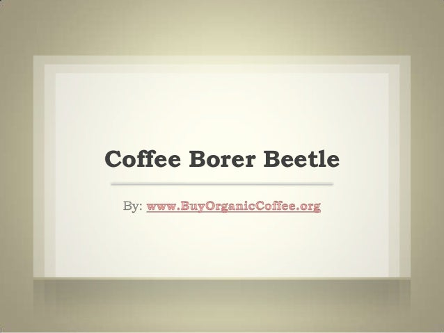 Coffee Borer Beetle