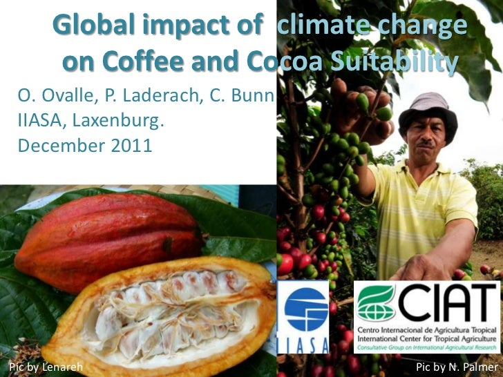 Global impact of climate change        on Coffee and Cocoa Suitability O. Ovalle, P. Laderach, C. Bunn IIASA, Laxenburg. D...