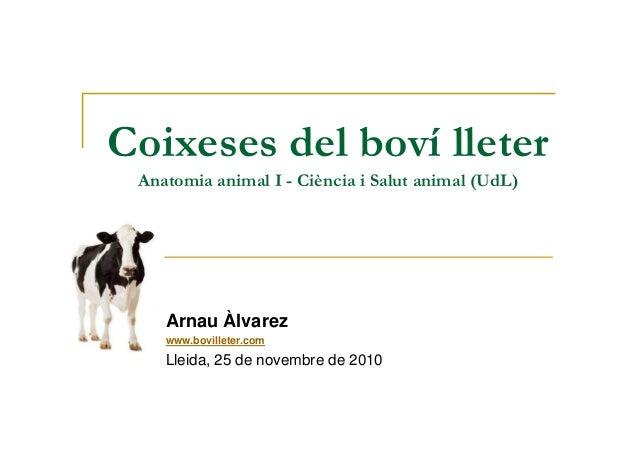 Coixeses del boví lleter Anatomia animal I - Ciència i Salut animal (UdL) Arnau Àlvarez www.bovilleter.com Lleida, 25 de n...