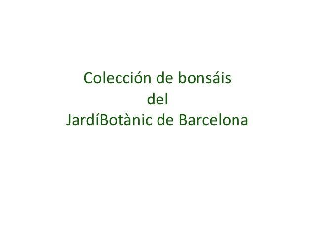 Colección de bonsáis del JardíBotànic de Barcelona