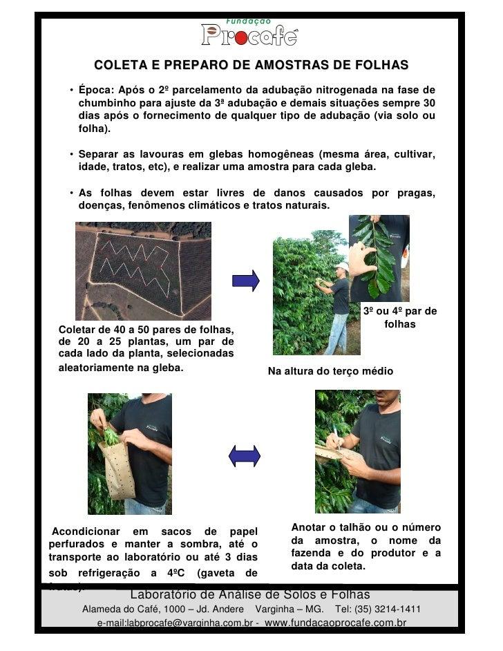COLETA E PREPARO DE AMOSTRAS DE FOLHAS   • Época: Após o 2º parcelamento da adubação nitrogenada na fase de     chumbinho ...