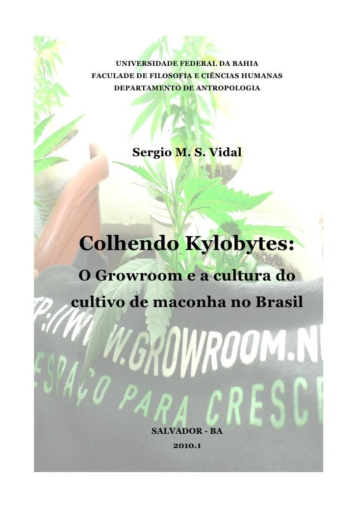 Colhendo  Kylobytes    O  Growroom E A Cultura Do Cultivo De Maconha No  Brasil