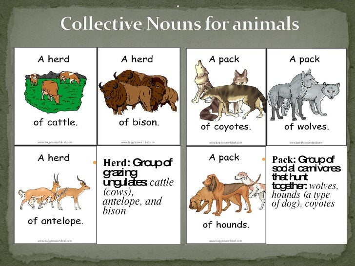 list of collective nouns Collective nouns answer key a collective noun names a group of people, animals or things sometimes a prepositional phrase follows a collective noun.