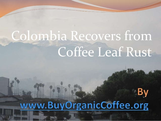 Colombia Recovers from Coffee Leaf Rust