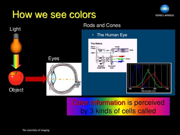 What Color Do We Perceive Natural Light