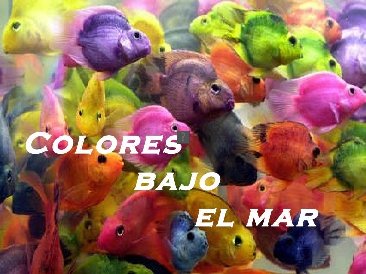 Colores  bajo  el mar