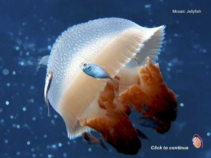 Mosaic Jellyfish Click to continue