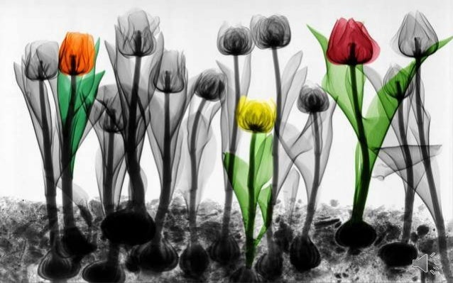 Colorized X- ray photographs By Arie van't Riet