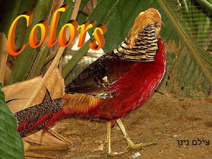 Colors צילם נינו