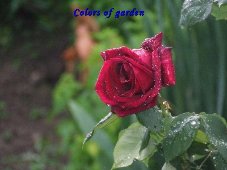 Colors of garden