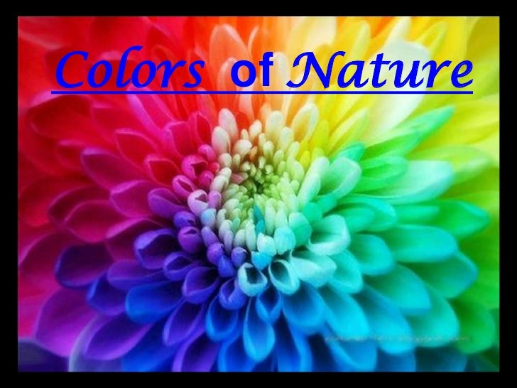 ‏‏ The Color Of Nature