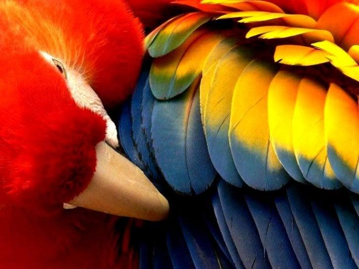 Colors that enchant