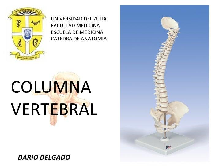 UNIVERSIDAD DEL ZULIA FACULTAD MEDICINA ESCUELA DE MEDICINA CATEDRA DE ANATOMIA COLUMNA VERTEBRAL DARIO DELGADO