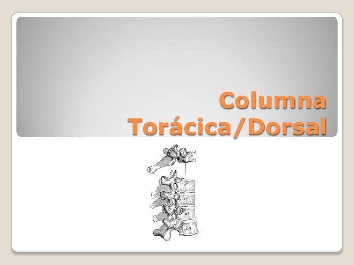 Columna Torácica/Dorsal<br />