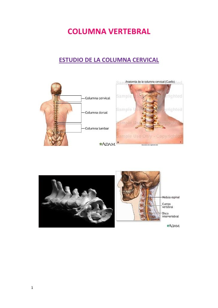 COLUMNA VERTEBRAL    ESTUDIO DE LA COLUMNA CERVICAL1