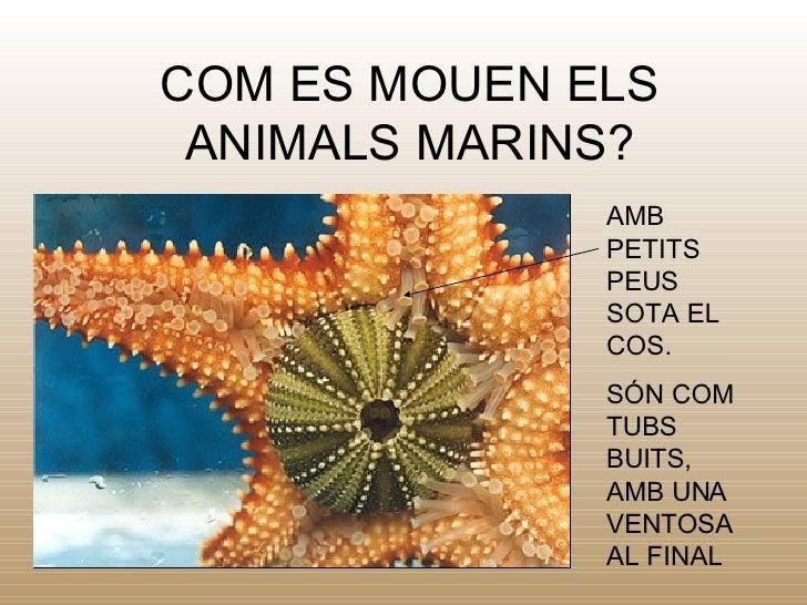COM ES MOUEN ELS ANIMALS MARINS? AMB PETITS PEUS SOTA EL COS.  S ÓN COM TUBS BUITS, AMB UNA VENTOSA AL FINAL