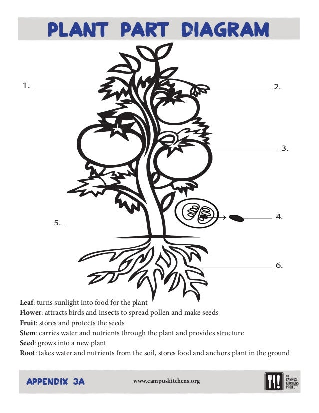 Free Parts Of A Plant Coloring Page