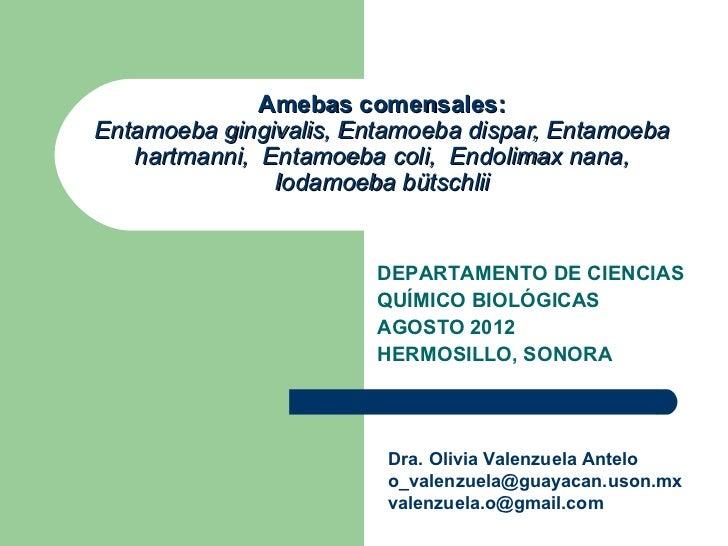 Amebas comensales:Entamoeba gingivalis, Entamoeba dispar, Entamoeba   hartmanni, Entamoeba coli, Endolimax nana,          ...