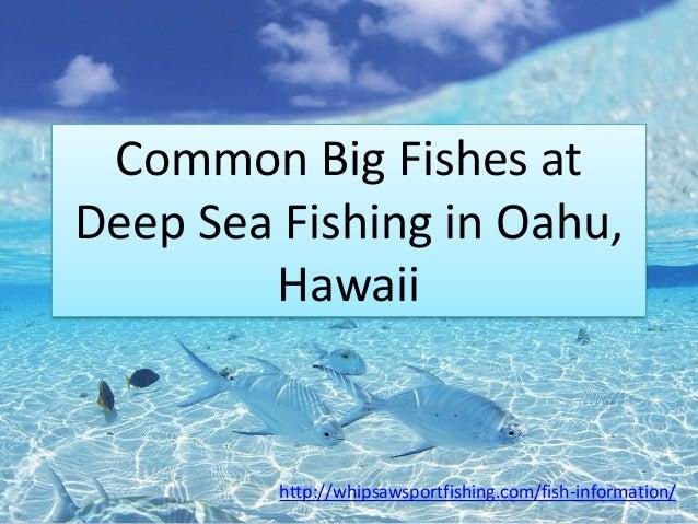 Common big fishes at deep sea fishing in oahu hawaii for Deep sea fishing oahu