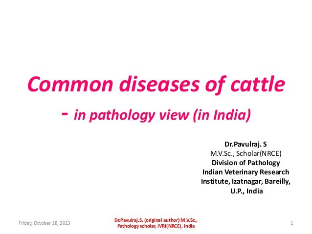 Common diseases of cattle - in pathology view (in India) Dr.Pavulraj. S M.V.Sc., Scholar(NRCE) Division of Pathology India...