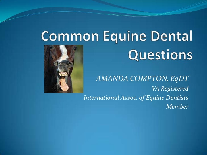 Common Equine Dental Questions
