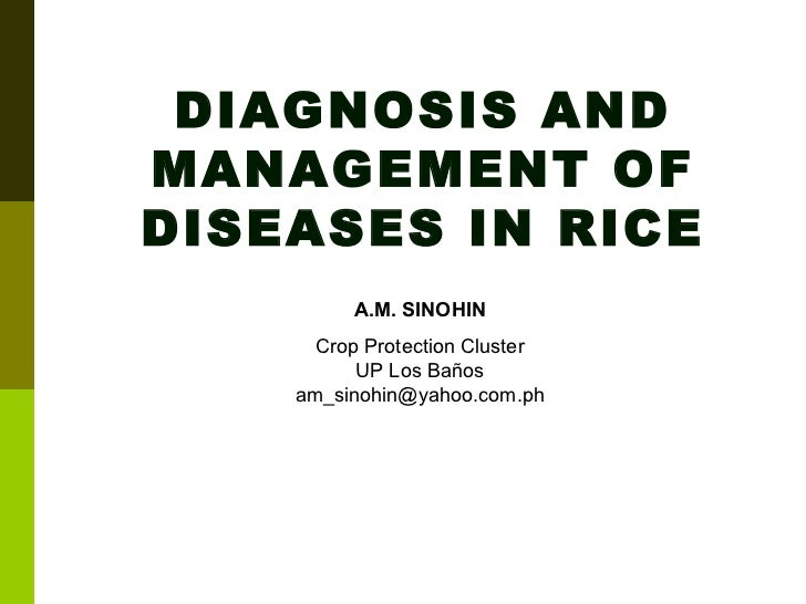 DIAGNOSIS AND MANAGEMENT OF DISEASES IN RICE A.M. SINOHIN Crop Protection Cluster UP Los Baños [email_address]