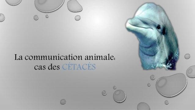La communication animale: cas des CÉTACÉS