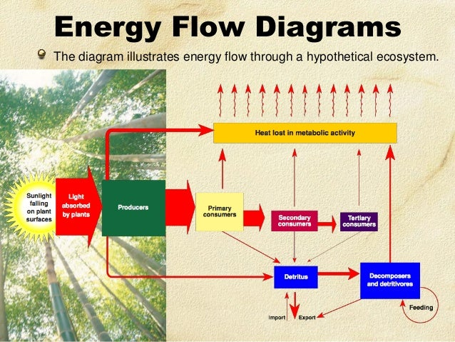 create a diagram in which you illustrate the energy flow among organisms of a food chain in a partic